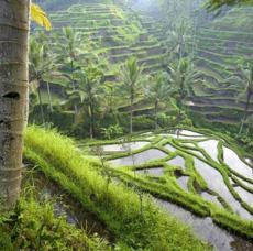 Horoscop Urania Pesti Indonezia 2012